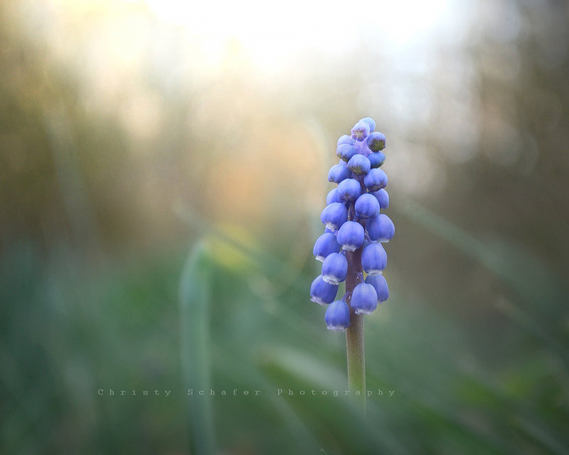 the hues of april by knowhopeinme